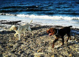 spiaggia sardegna cani