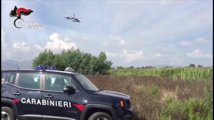 sequestro marijuana oristano carabinieri