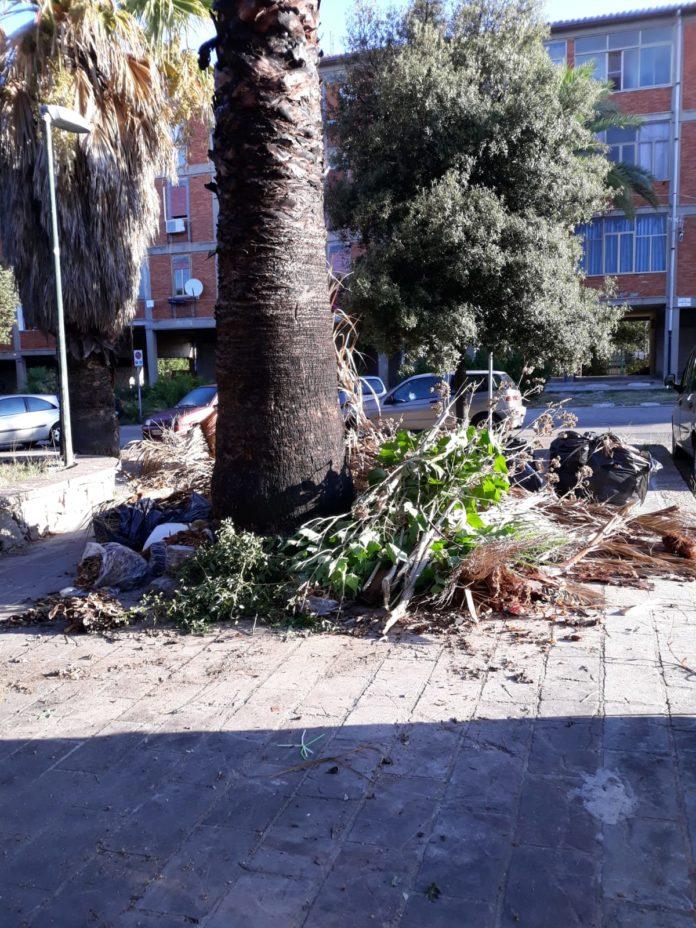 via bottego palme pericolo