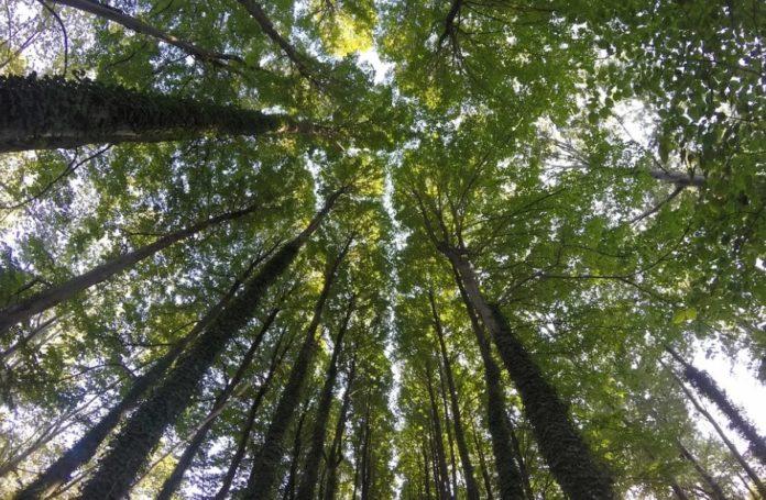 giornata mondiale dell'albero sassari nurra palmadula novembre 2019