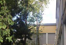 sassari scuola alberi abbattimento sicurezza scuola via ogliastra