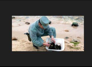 ricci di mare sardegna corpo forestale tutela