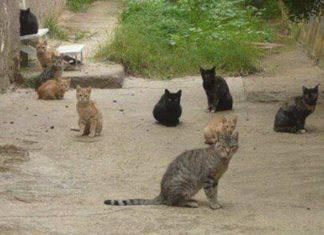 colonia felina castelsardo sterilizzazione gatti