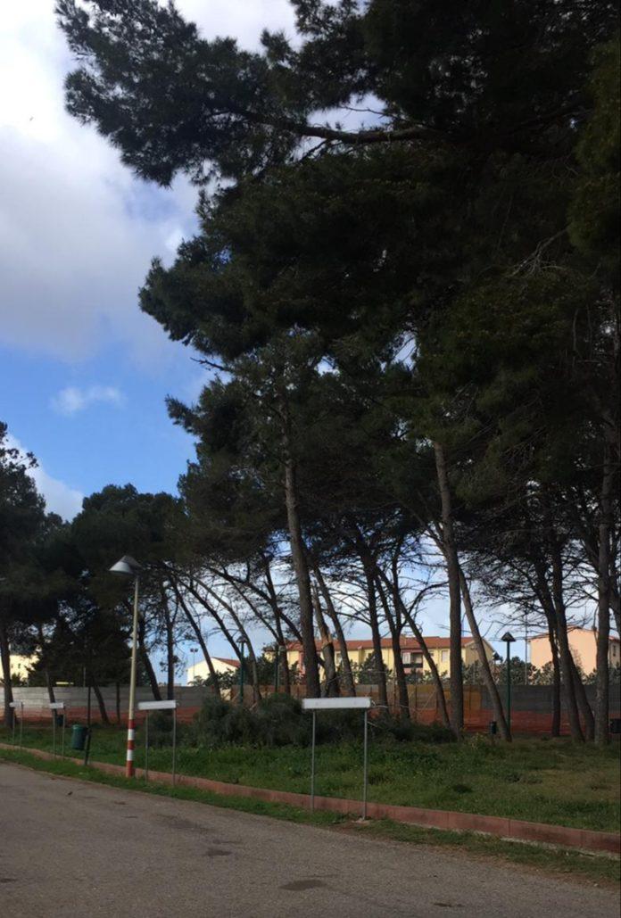 sassari ippodromo alberi