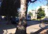 alberi sassari