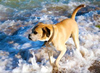 cane mare bagno spiaggia