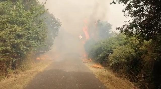 sardegna incendi